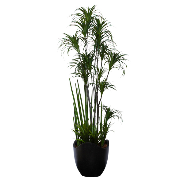 Dracena Combination Basket