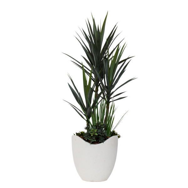 Yucca Combination in Basket