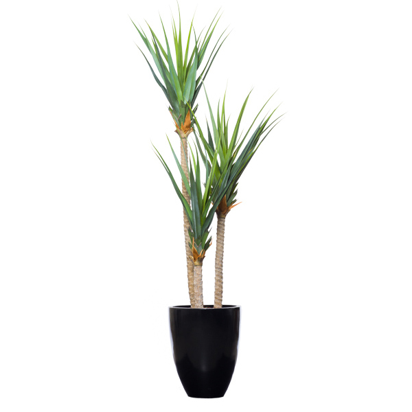Triple Pandanus in Black Pot