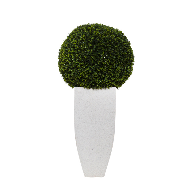 Mini Boxwood Ball in White Square Pot