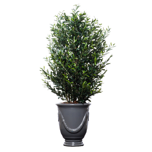 5-ft. Olive Tree in Garland Urn