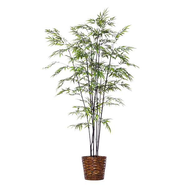 8-ft. Black Bamboo in Basket