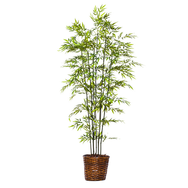 8-ft. Green Bamboo in Basket