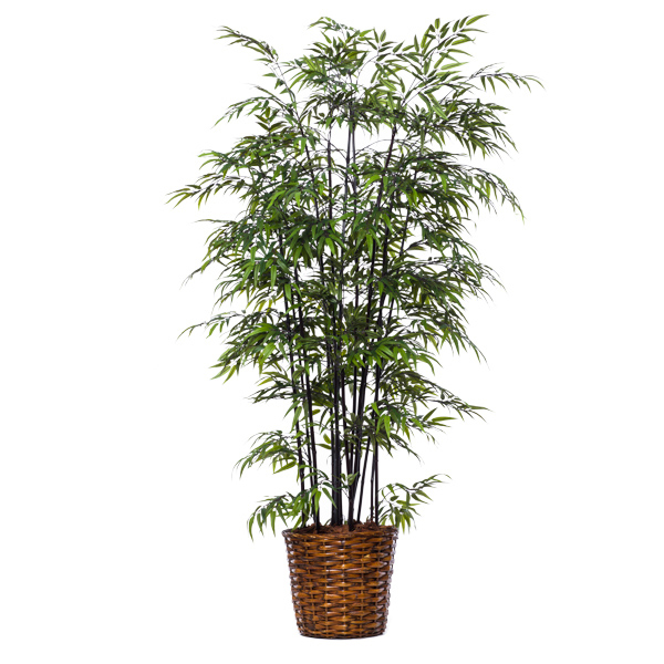 Deluxe Black Bamboo in Basket