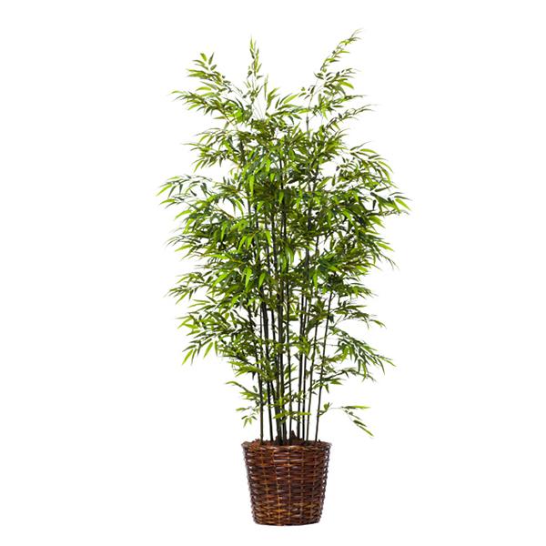 Deluxe Green Bamboo in Basket