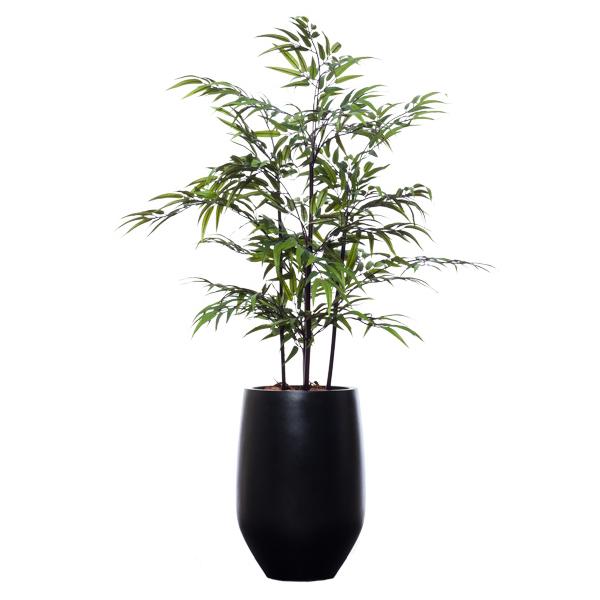 5-ft. Black Bamboo in Black Pot