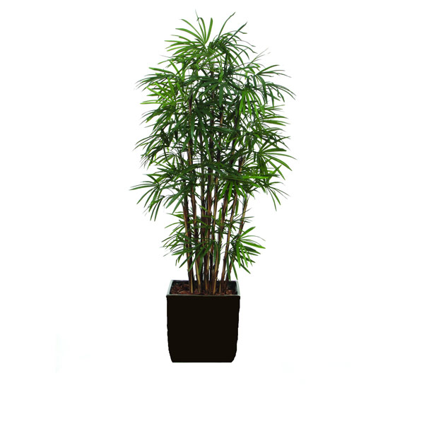 7' LADY FINGER PALM/BASKET