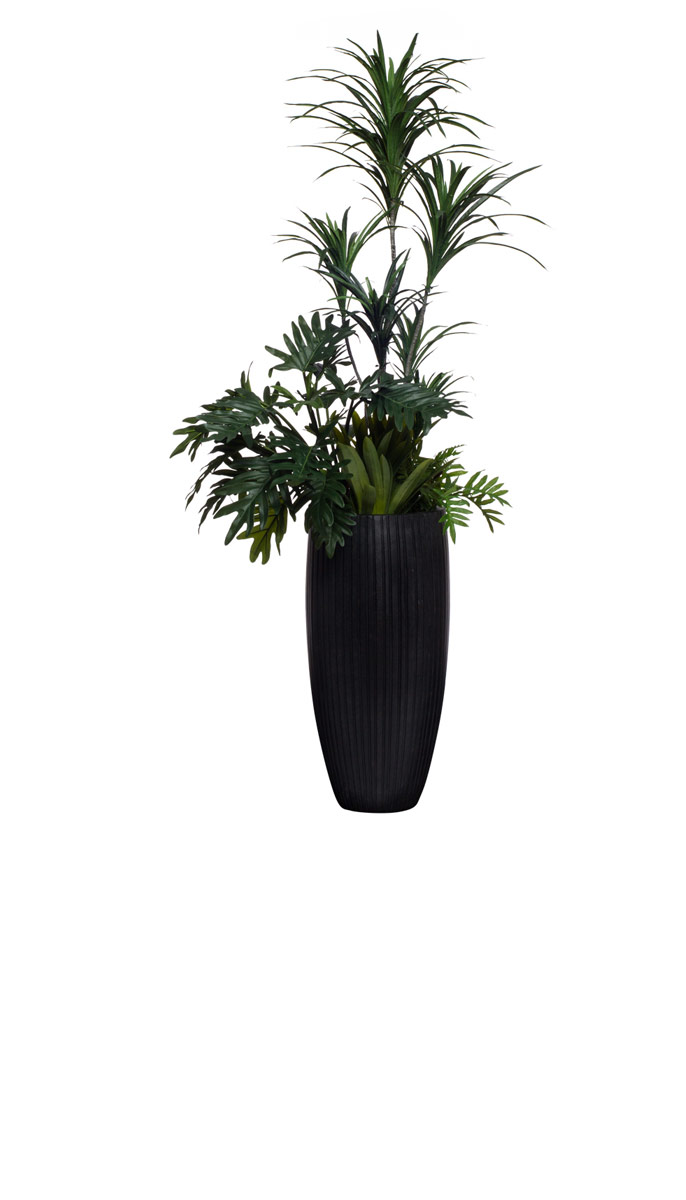 DRACENA/SUCCULENT/SELLOUM COMBINATION IN BLACK POT