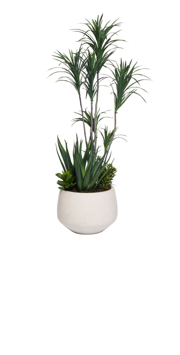 DRACENA/SUCCULENT COMBINATION IN WHITE POT