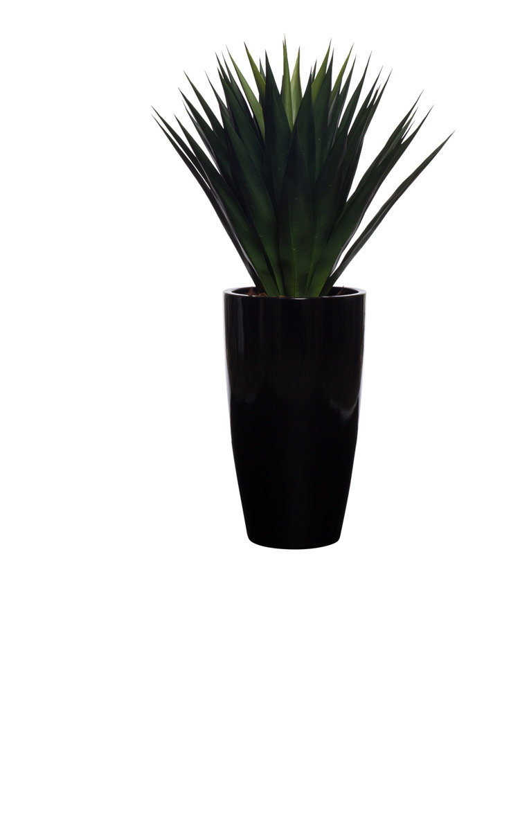 ALOE IN TALL SHINY BLACK TAPPERED POT