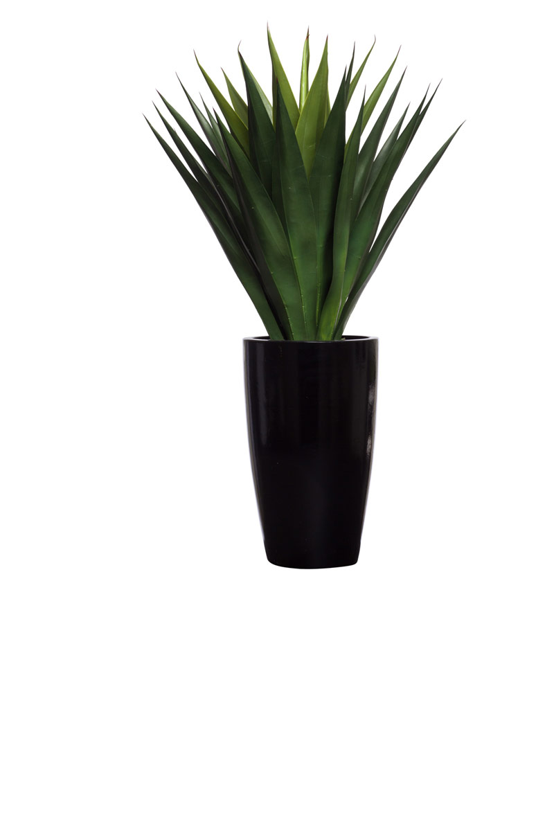 ALOE IN BLACK SHINY TAPPERED POT