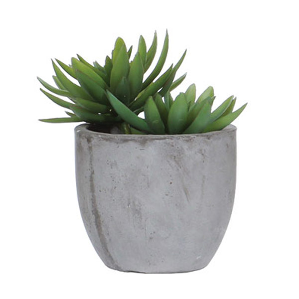 Succulent in Rock Pot