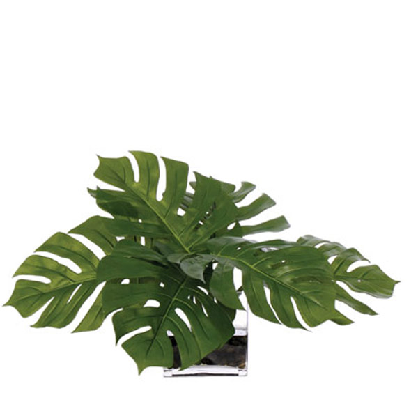 Lg. Split Leaf Waterlike