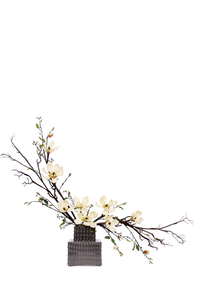 Magnolia in Grey Container
