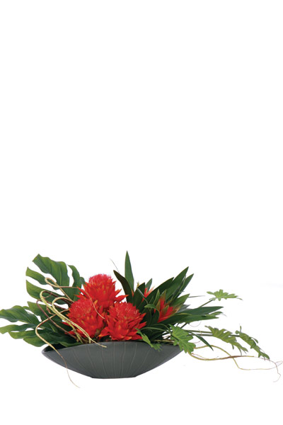 Pin Cushion Bromeliad in Oval Container