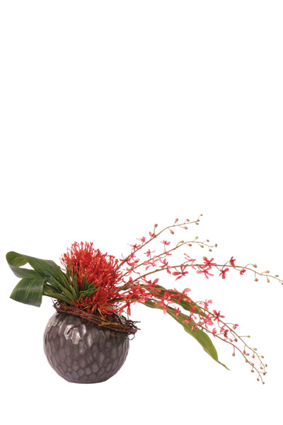 Pin Cushion / James Story Vanda in Black Ball Vase