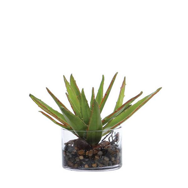 Aloe Waterlike