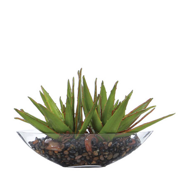 Double Aloe Waterlike