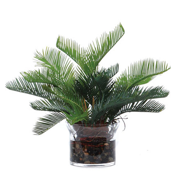 Cycas Waterlike