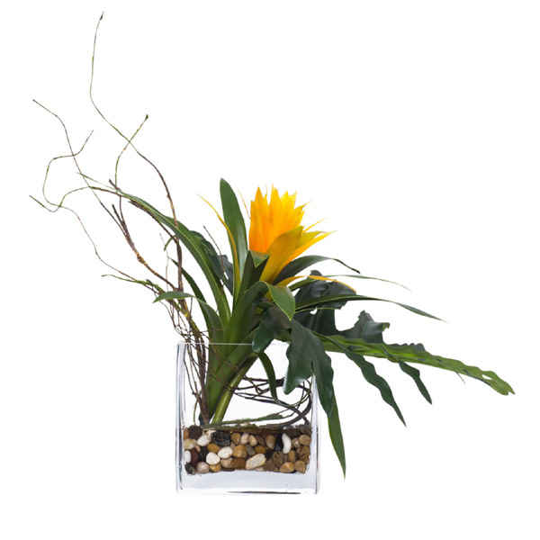 Bromeliad Waterlike