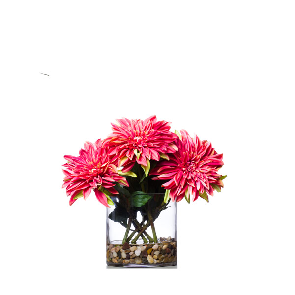 CORAL DAHLIA WATER LIKE