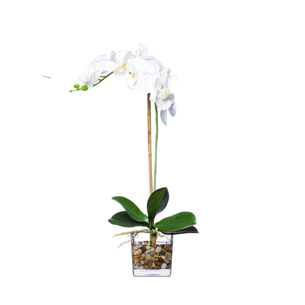WHITE PHAL/ CUBE WATER LIKE