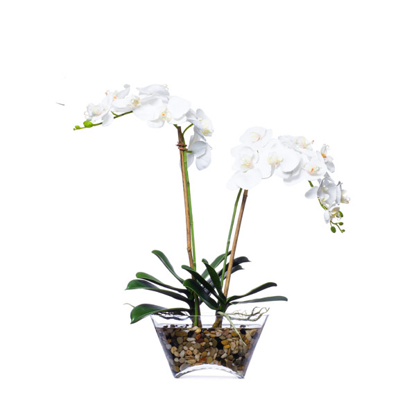 DBL  WHITE PHAL WATER LIKE
