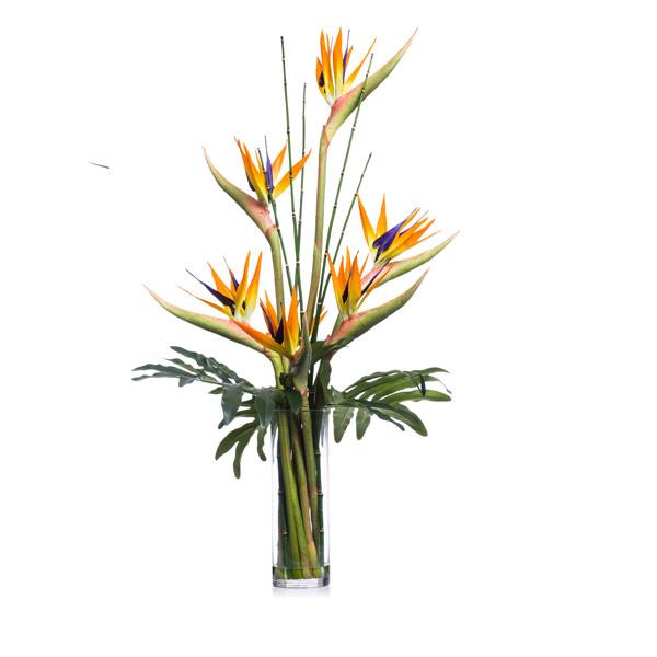 Orange Bird of Paradise Waterlike
