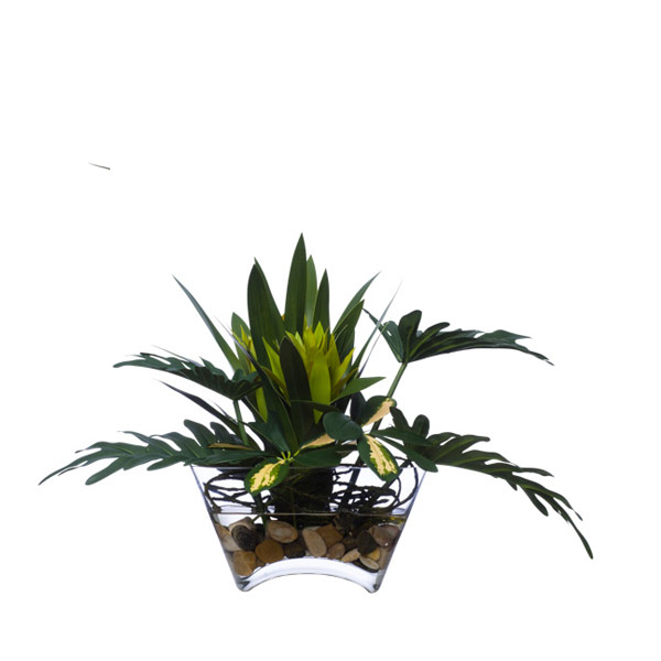 SPLIT LEAF/GREEN BROMELIAD WATER LIKE
