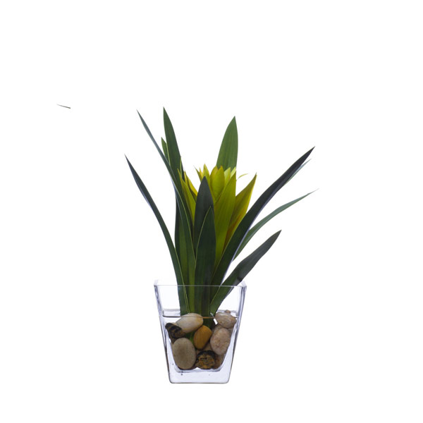 GREEN BROMELIAD WATER LIKE