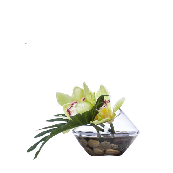 GREEN CYMBIDIUM/SELLOUM WATER LIKE