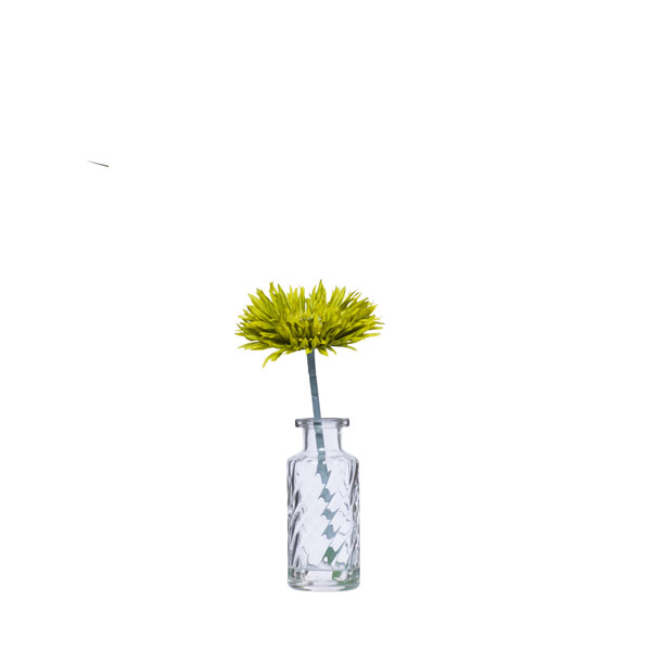 GREEN SPIDER MUM WATER LIKE
