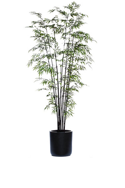 9.5' BLACK BAMBOO/BASKET
