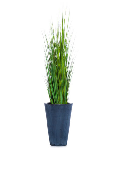 5.5' GRASS IN TIN POT