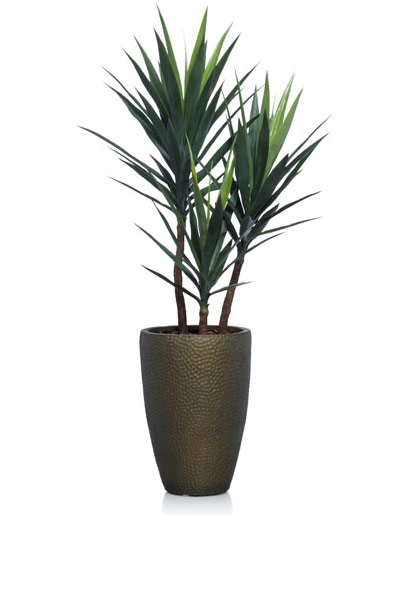 5' YUCCA IN SMALL BRONZE POT
