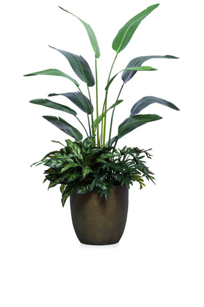 5.5' TRAVELERS PALM COMBINATION/BASKET