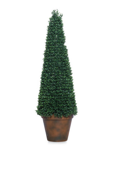 4' BOXWOOD CONE TOPIARY IN POT