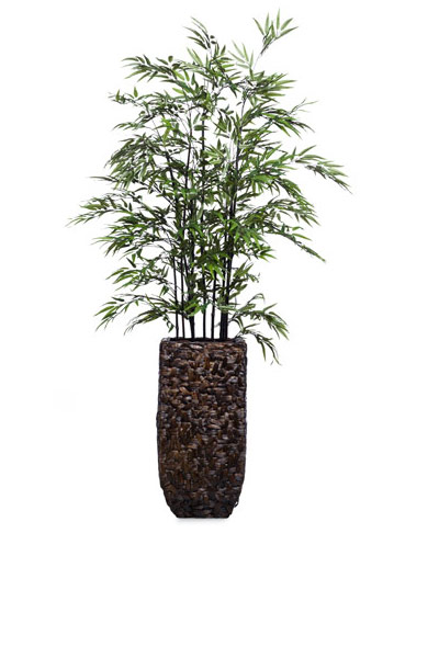 7' BLACK BAMBOO IN BAC BAC