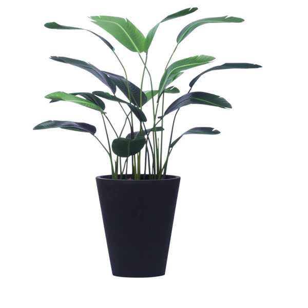5' TRAVELERS PALM IN BLACK OVAL POT