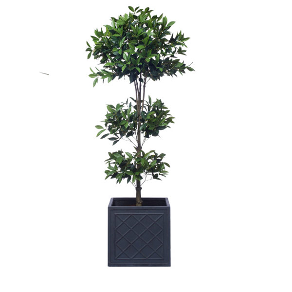 6' TRIPLE LAUREL TOPIARY/BASKET