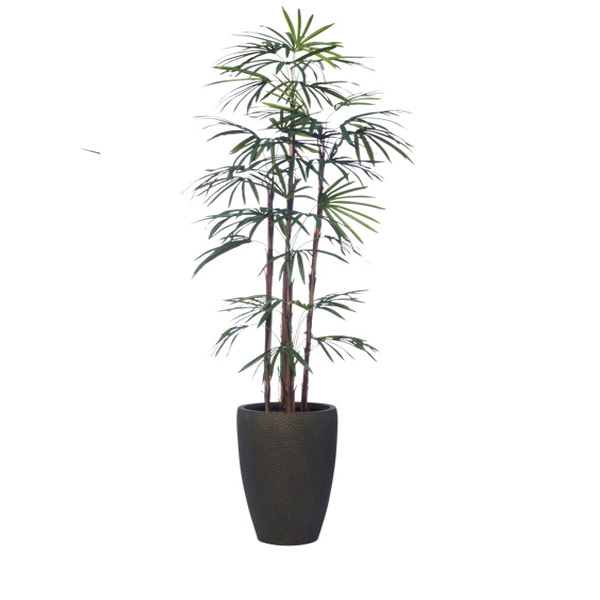 6.5' LADY FINGER PALM IN SMALL TALL BRONZE DIMPLED POT