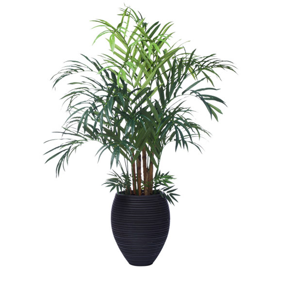 7.5' KENTIA PALM IN SMALL HONEY POT
