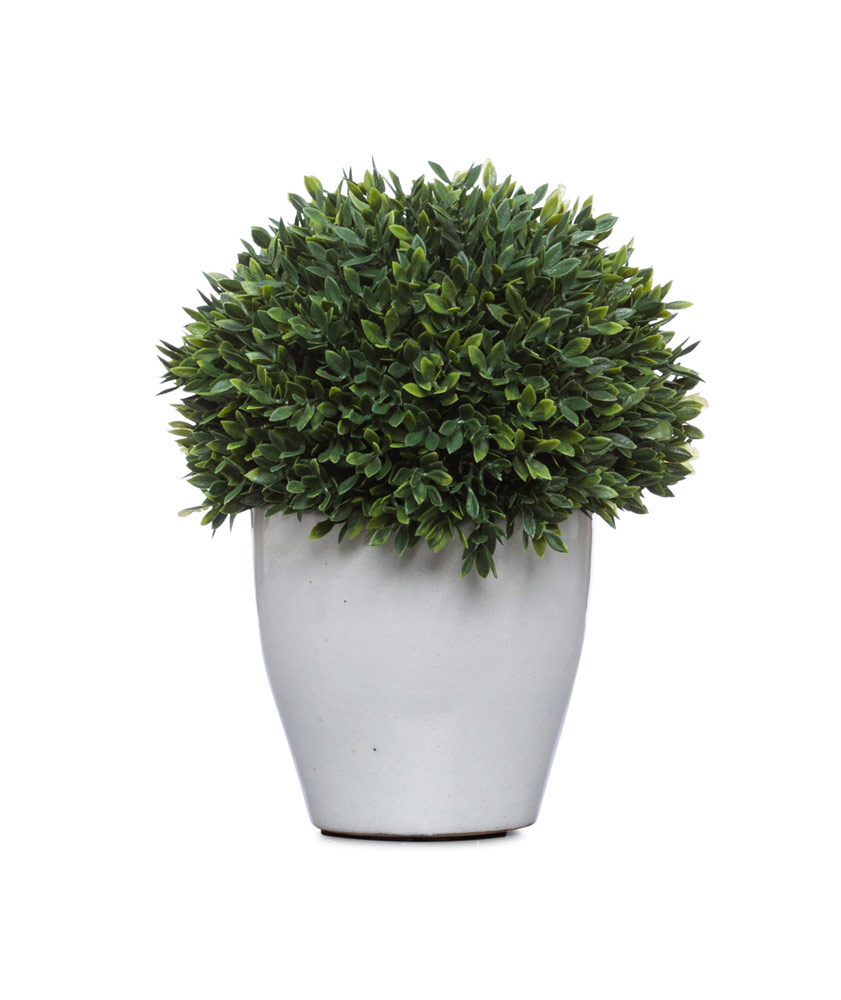 Boxwood Ball in Small Black Pot