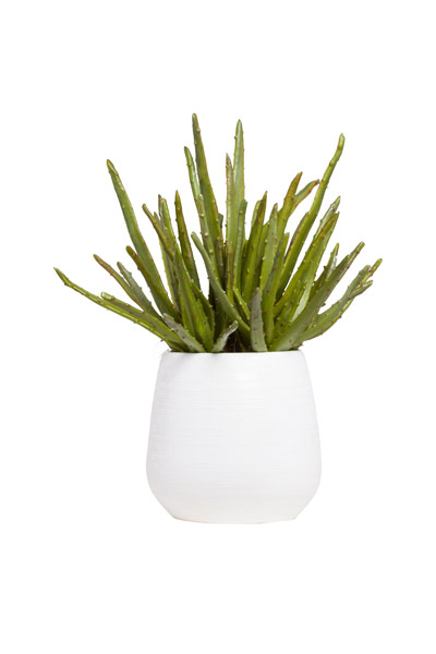 ALOE/SUCCULENT IN WHITE BENJI POT