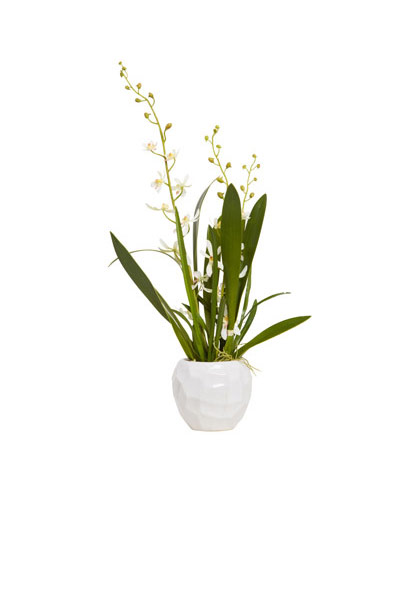 CREAM ORCHID IN WHITE CHIP POT