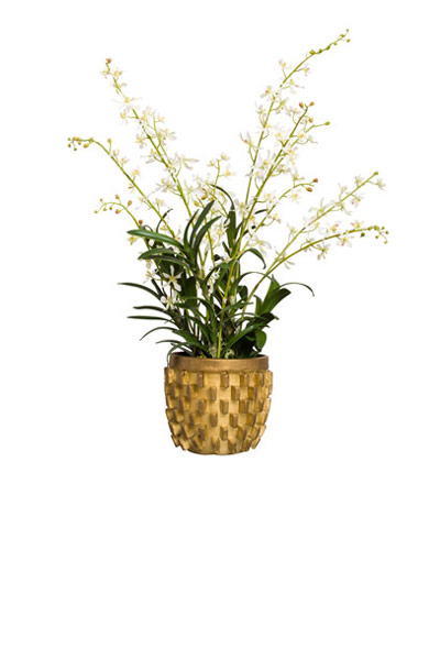 WHITE JS ORCHID IN GOLD VASE