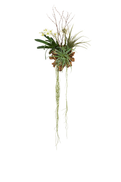 VANDA WITH ROOTS ON WOOD WALL HANGING