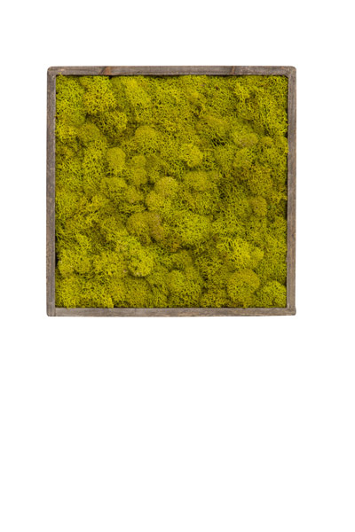 SET X 3 CHARTREUSE MOSS IN WOOD PLANTER WALL HANGING
