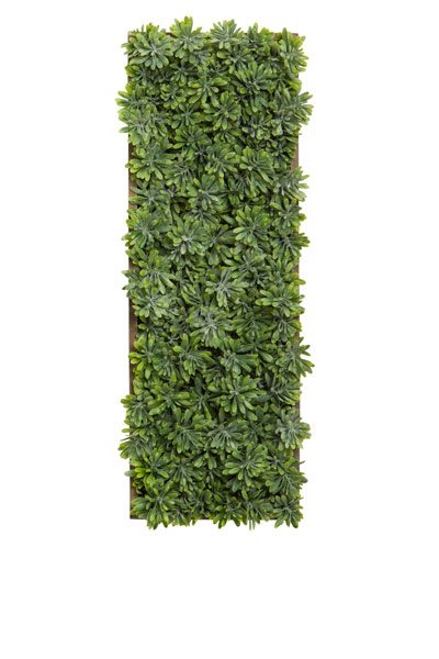 SUCCULENT GRASS IN WOOD PLANTER WALL HANGING