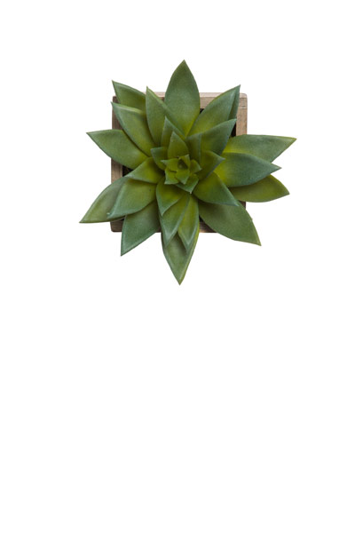 SUCCULENT IN SMALL WOOD HANGING PLANTER